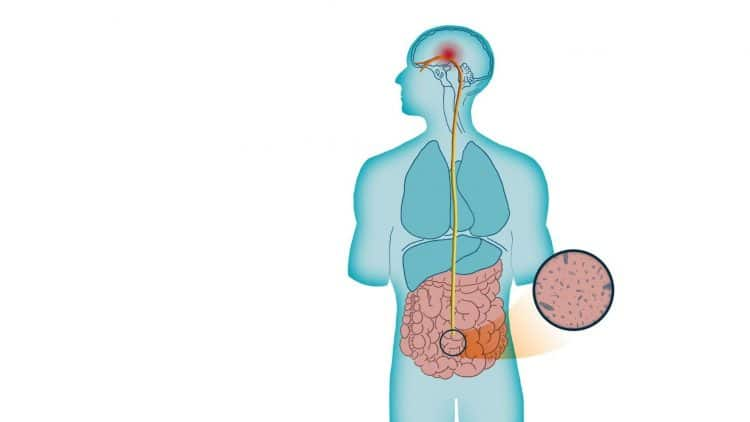 Illustration of the vagus nerve from head to torso