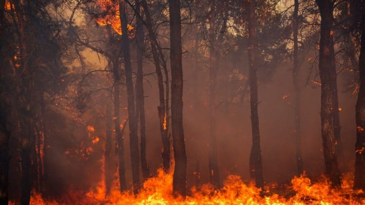 fire burning through trees